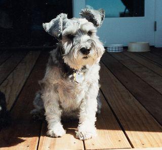Maddie1996