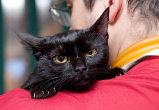 Bigstock-Vet-caressing-cute-black-cat-o-26028383