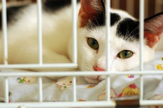 Bigstock-Bored-Kitty-In-Cage-3626344