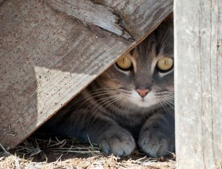 Bigstock-Hide-a-kitty--cat-hiding-unde-25958015