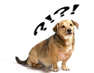 Bigstock-Dog-Puzzled-39406777