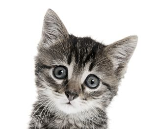 Bigstock-kitten-on-a-white-background-27934382