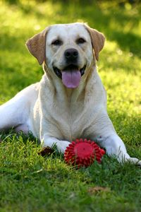 Bigstock-Happy-Dog-Face-242235
