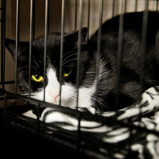Bigstock-Homeless-Cat--Rescued-Feline--40424641