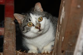 MFCats_Eartipped_IMG_1274