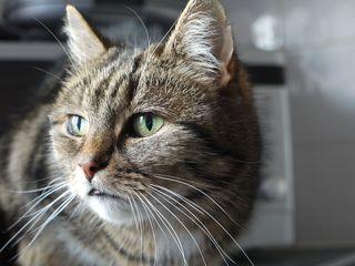 Bigstock-Cat-43099879