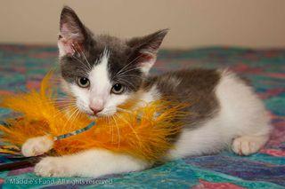 KittenFeather