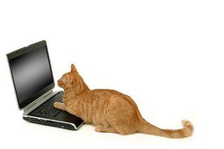 Bigstock-Cat-lokking-at-scrren-841118