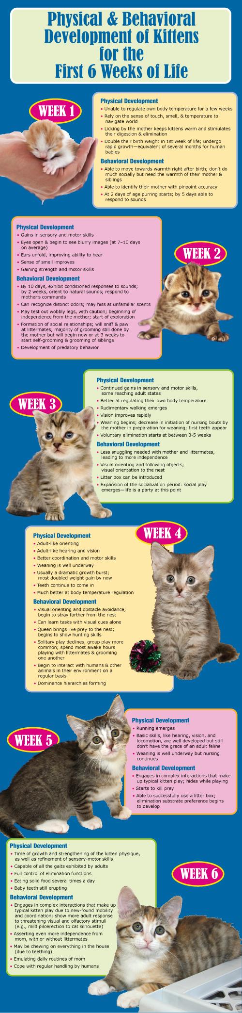 Kittens-1st_6_weeks6