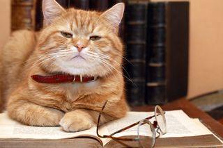 Bigstock-Scientist-Cat-9923891