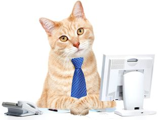 Bigstock-Cat-businessman-in-the-office--41088628