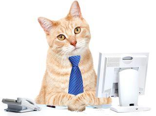 Bigstock-Cat-businessman-in-the-office--41088628