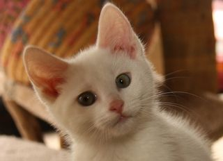 Cats_Fostered_IMG_2669