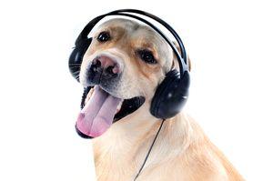 Bigstock-Dog-in-headphones-20074754