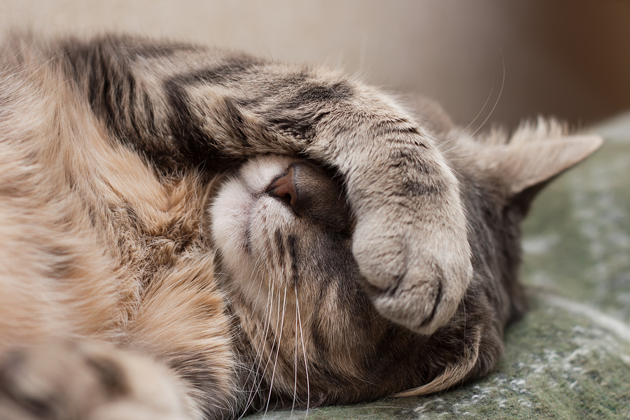 This feline facepalm is how I felt when I heard the hype about cat bites