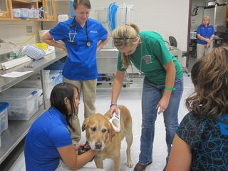 MFAdventures_in_veterinary_medicine_exam_lab