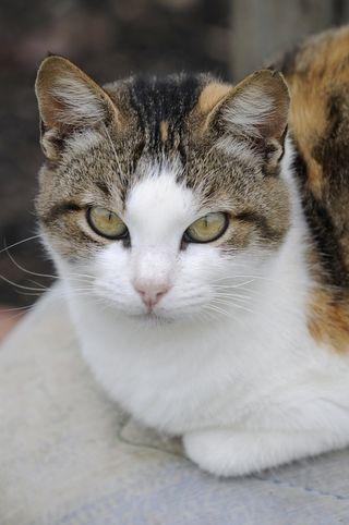 Bigstockphoto_Domestic_Cats_4160418