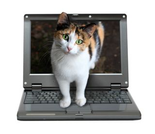 Bigstock-small-laptop-with-cat-out-of-s-56227520