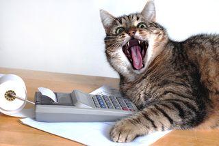 Bigstock-Cat-Near-Calculator-29338763