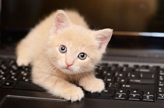 Bigstock-Kitten-On-The-Computer-51472945