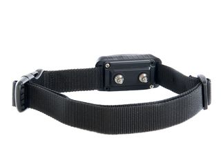 Bigstock-Electronic-Collar-37528081