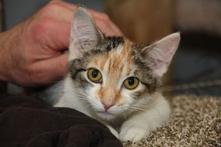 MFCats_Sheltered_IMG_0436