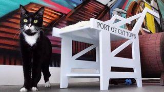 CatTownCafe