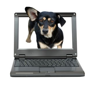 Bigstock-small-laptop-with-dachshund-do-56227583