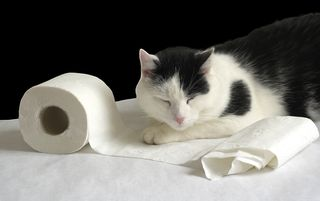 Bigstock-Cat-and-soft-paper--6516162