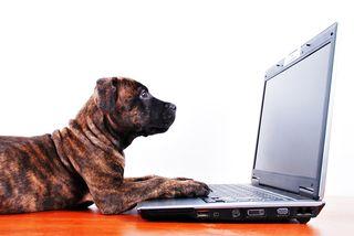 Dog_on_Laptop