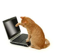 Bigstock-Tiger-and-laptop-841093