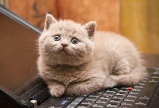 Bigstock-Kitten-On-A-Laptop-10624874
