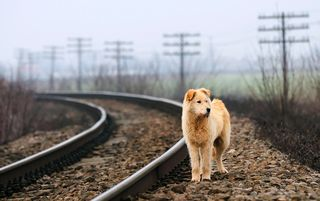 Bigstock-Waiting-Lonely-Dog-27272846