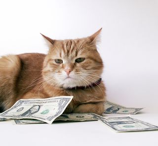 Bigstock-Cat-With-Cash-2387110