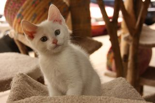MFCats_Fostered_IMG_2669
