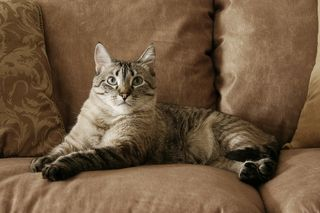 Bigstock-Cats--797107