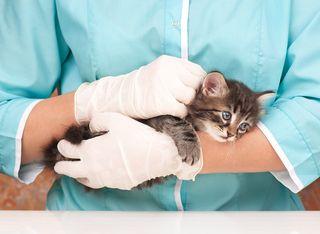 Bigstock-Veterinary-Survey-83427191