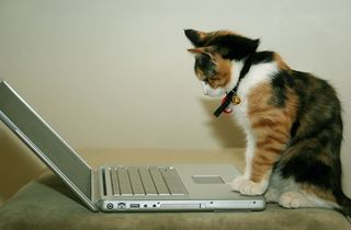 Bigstock-Cat-Using-The-Computer-287555