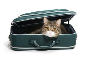 Bigstock-Cat-In-A-Suitcase-52964818