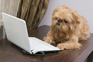 Bigstock-Dog-And-A-Laptop-62392214