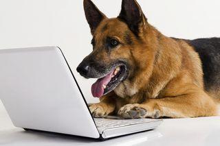 Bigstock-German-Shepherd-dog-using-a-la-84956189