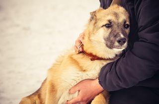 Bigstock-Dog-Shepherd-Puppy-And-Woman-H-64486573