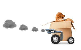 Bigstock-Dog-in-a-cardboard-box--fast--44812678
